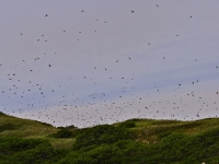 natural-insect-control-swallows-truro-ma-usa