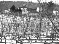 truro-vineyards-in-winter-cape-cod-ma-jpg