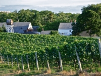 truro-vineyards-july-truro-ma-usa