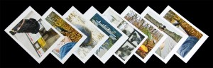 Birds and Animals - Fine Art Postcards