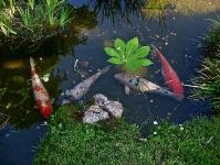 asian-garden-golden-gate-park-san-francisco-ca-usa
