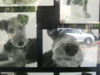 how-much-is-that-doggie-in-the-window-sf-ca-usa
