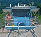 nice-work-if-you-can-get-it-stinson-beach-ca-usa
