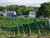 truro-vineyards-july-truro-ma-usa